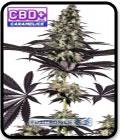 CBD + Caramelice Express