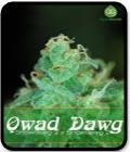 Qwad Dawg
